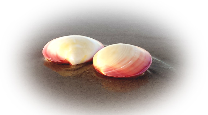 Lava Shell Massage – Muschelmassage